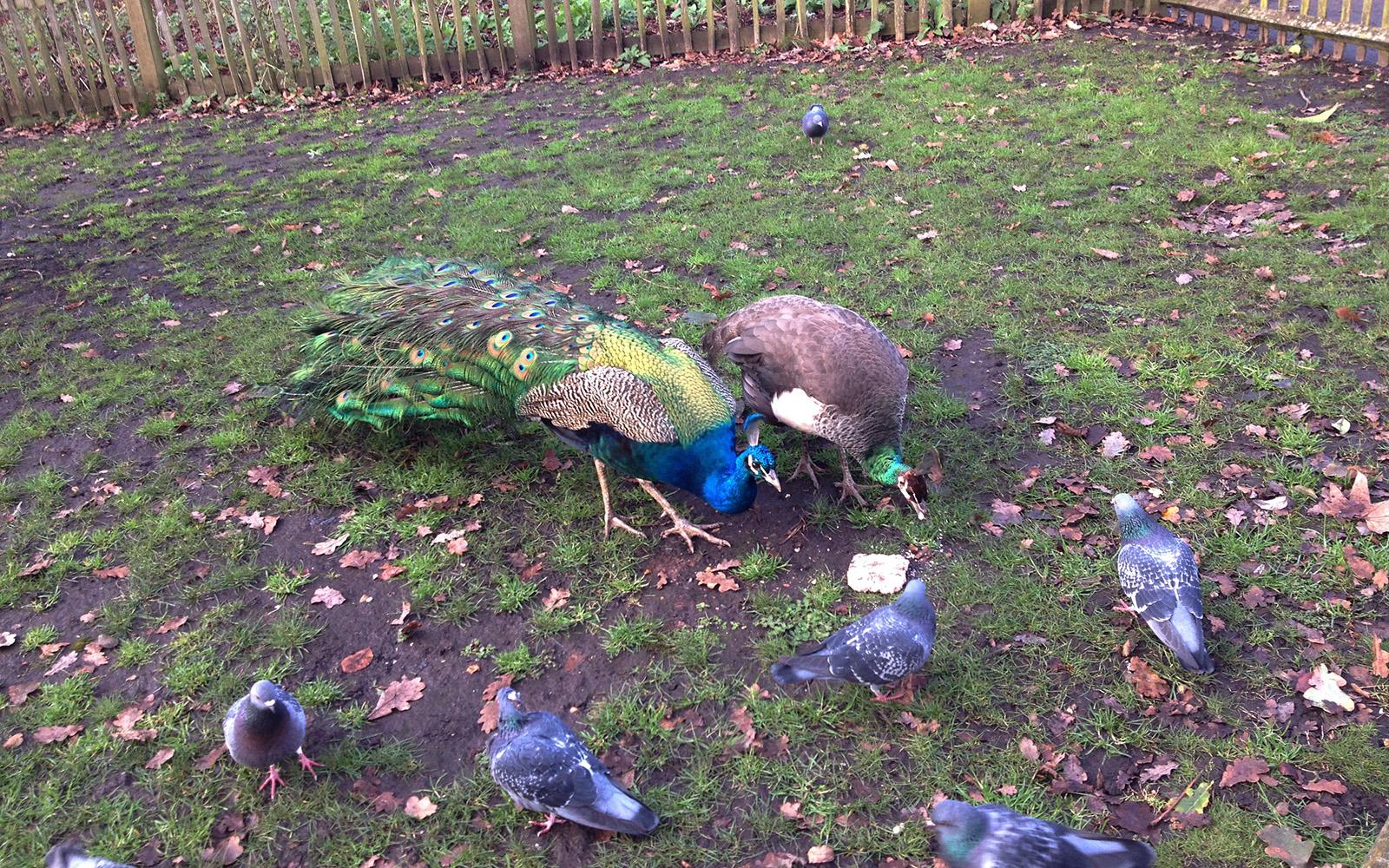 London In Photos Holland Park